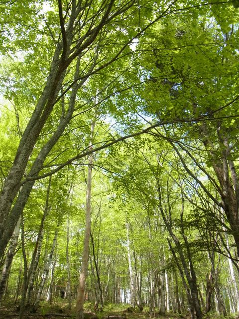 湿度の低い森